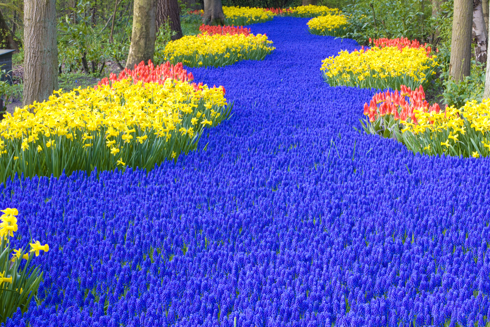 keukenhof garden - Beautiful Garden Pictures
